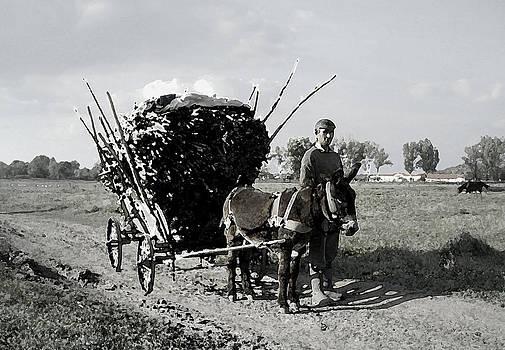 Coming Home by Bogdan M Nicolae