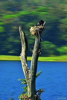Commerant Nest by Vinod Nair