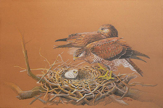 Common Buzzard pair by Deak Attila