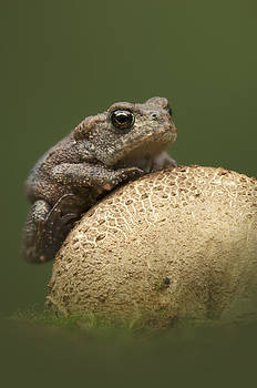 Common Toad by Andy Astbury