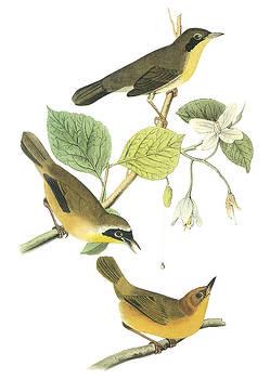John James Audubon - Common Yellowthroat