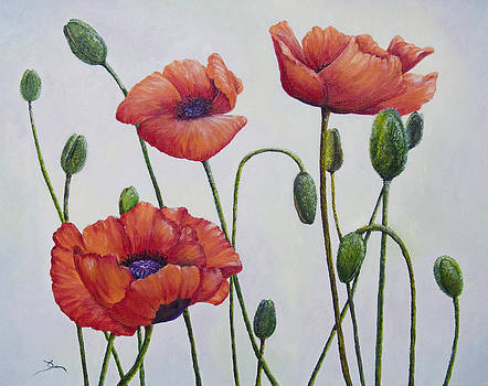Dee Carpenter - Complimentary Poppies