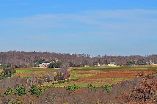 Connecticut Farmland by Peter  McIntosh