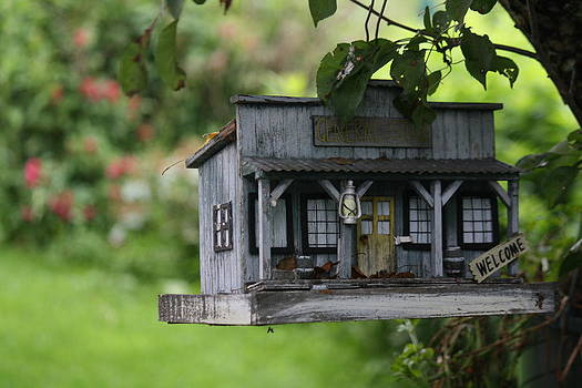 Donna Walsh - Cool Bird House
