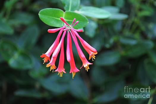 Coral Bean Array by Theresa Willingham