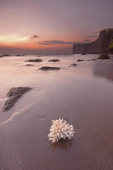 Coral By The Beach by Sydney Alvares