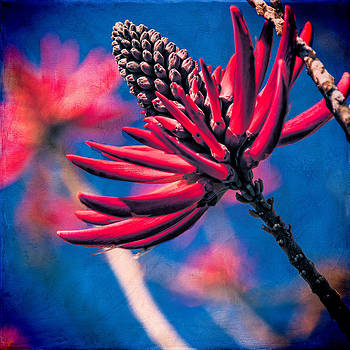 Chris Lord - Coral Tree Flower