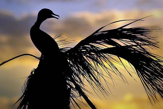 Cormorant Sunset by Robert Wicker