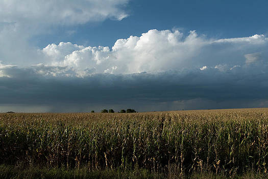 Corn Country by Jim Bunstock