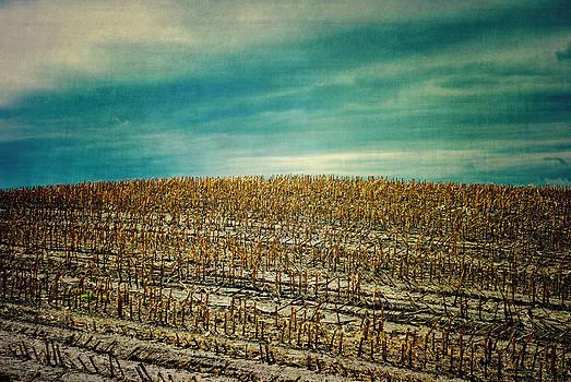 Corn Fields by Sharon Coty