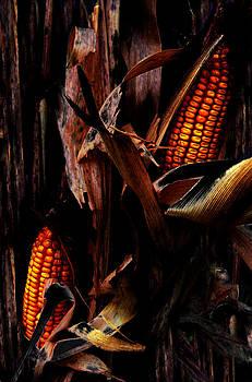 Corn Stalks by Rachel Christine Nowicki