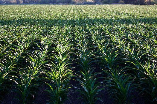 Chris Fullmer - Corns Rows