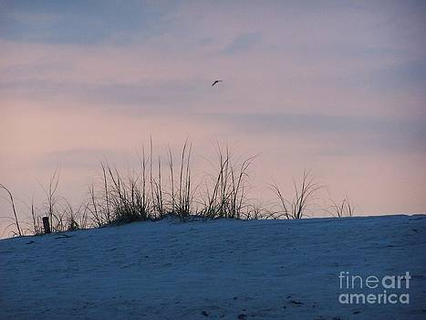 Cotton Candy Sky by Jeanne Forsythe
