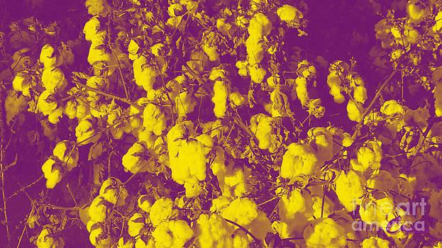 Feile Case - Cotton Golden Southwest