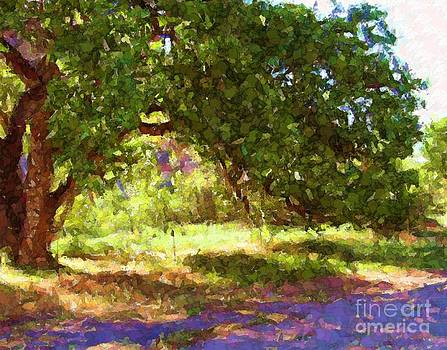 Cottonwood Tree and shade by Annie Gibbons