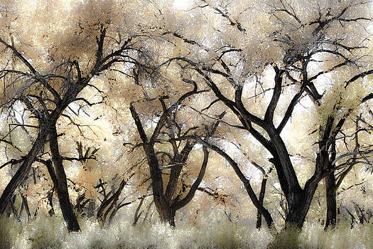 Cottonwood Trees by Denice Breaux