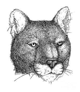 Cougar by Deanna Maxwell