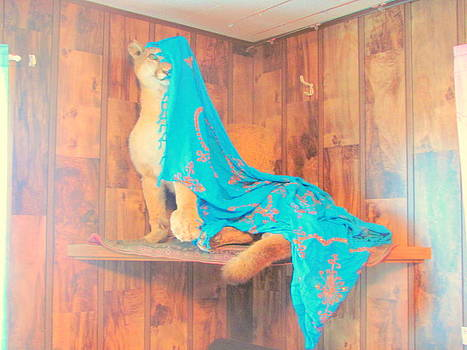Cougar with Blue Shawl by Amy Bradley
