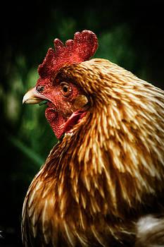 Scott Hovind - Country Chicken 10