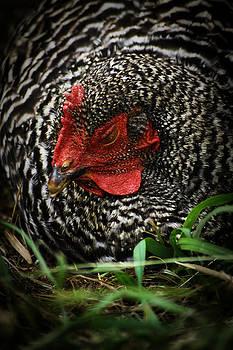 Scott Hovind - Country Chicken 12
