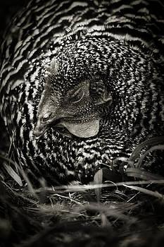 Scott Hovind - Country Chicken 13