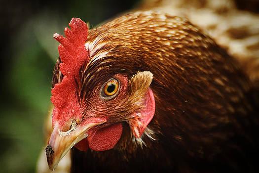 Scott Hovind - Country Chicken 14