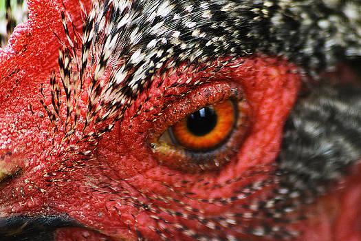 Scott Hovind - Country Chicken 16