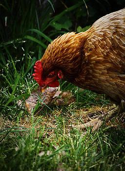 Scott Hovind - Country Chicken 2