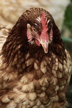 Scott Hovind - Country Chicken 4