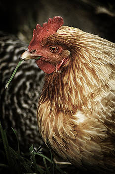 Scott Hovind - Country Chicken 6