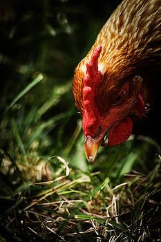 Scott Hovind - Country Chicken 8