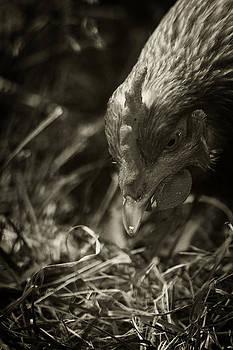 Scott Hovind - Country Chicken 9
