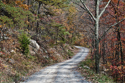 Country Road in West Virginia by Donna Harding