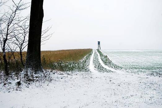 Country road by Nancie Teresa
