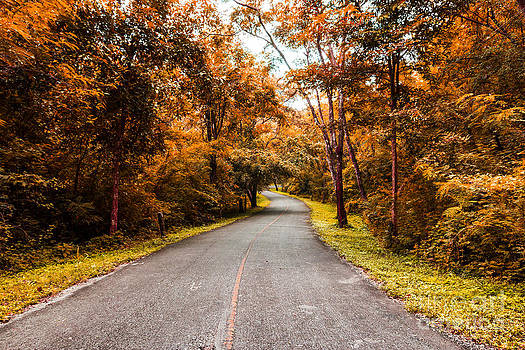 Countryside Road In Autumn by Mongkol Chakritthakool