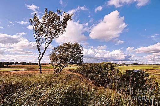 Countryside by Wedigo Ferchland