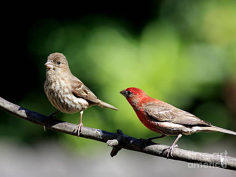 Wingsdomain Art and Photography - Courtship In Nature . 40D8073