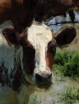 Cow in Pasture by Scott Smith