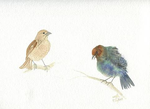 Cowbird courtship by Wenfei Tong