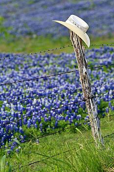 Cowboy Blue by Elizabeth Hart