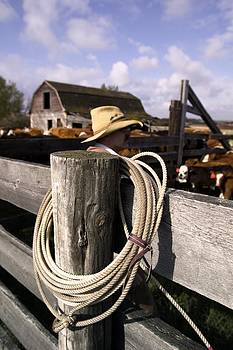 Cowboy Sorting Cattle by Design Pics