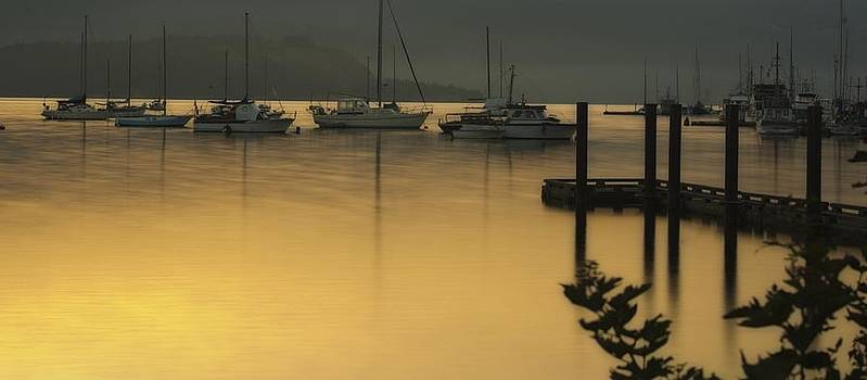 Cowichan Bay Mornings by Diane Smith