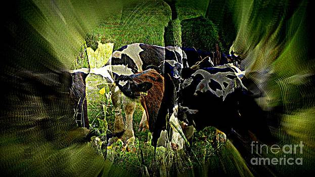 Cows dreaming by Leela Arnet