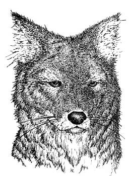 Coyote by Deanna Maxwell