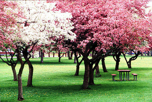 Crab Apple Trees 2 in Corning New York by Roger Soule