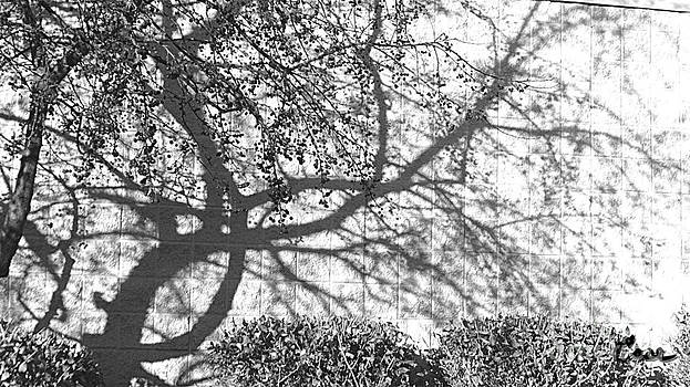 Feile Case - Crabapples West B and W