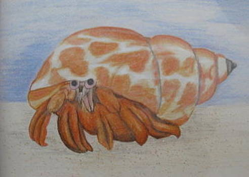 Crabby by Fran Haas