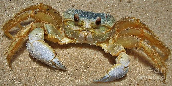 Crabby by Wendy Ohlman