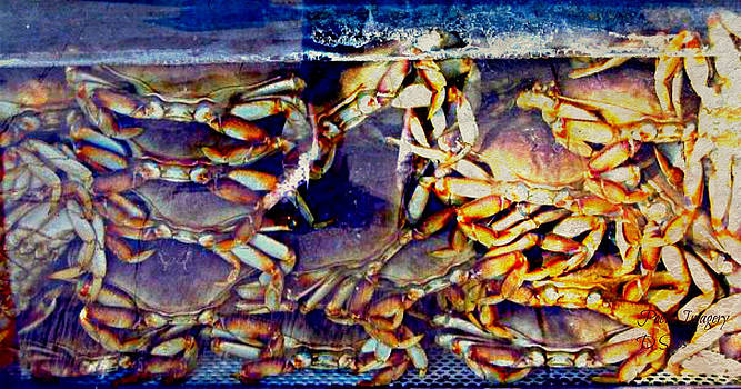 Crabs by Debbie Sikes