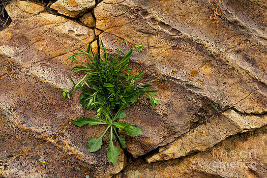 Crack  In the Wall by Barbara Schultheis